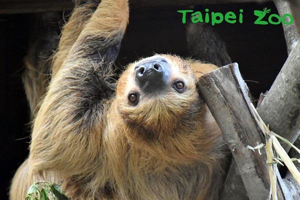 台北市立動物園-1.jpg