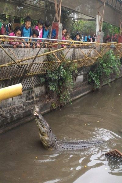 不一樣鱷魚生態農場-1.jpg