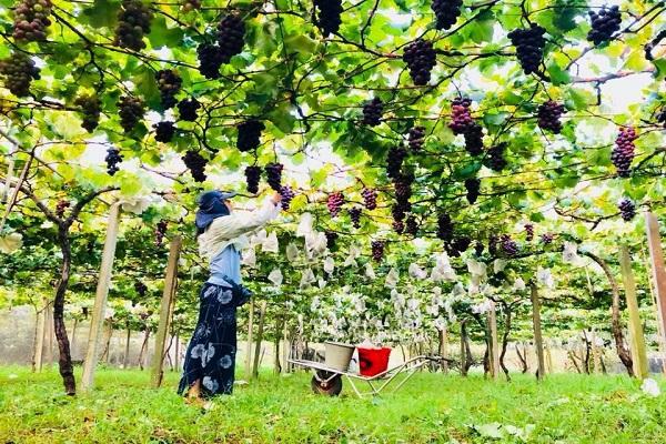 新峰農場-1.jpg
