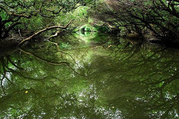 四草綠隧(台南旅遊網).jpg