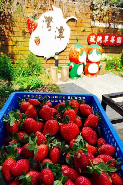 灣潭玫瑰草莓園.jpg