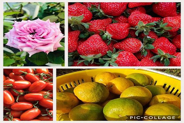 灣潭玫瑰草莓園-1.jpg