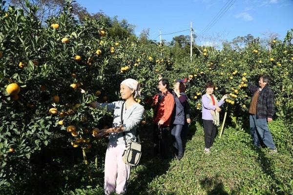 梨之鄉休閒農業區(台中觀光旅遊網).jpg