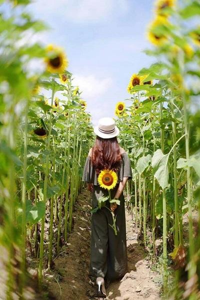 向陽農場-1.jpg