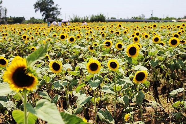 向陽農場-2.jpg
