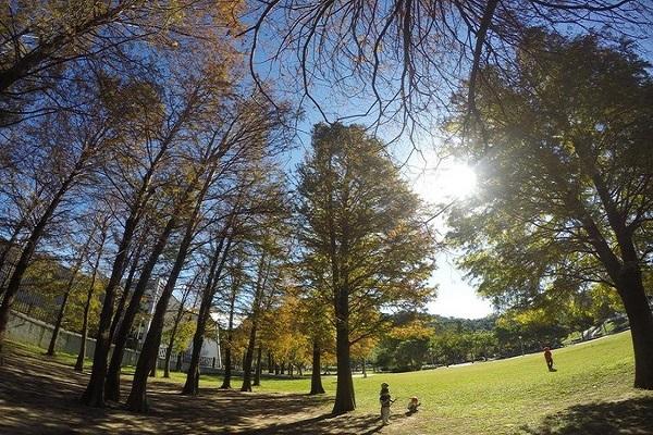 大湖公園-2.jpg