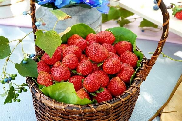 三本鮮莓園.jpg