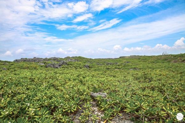 Okinawa7_15.jpg