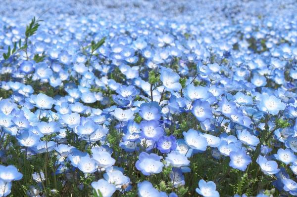 purpleflower_1.jpg