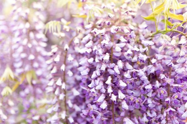 purpleflower_2.jpg