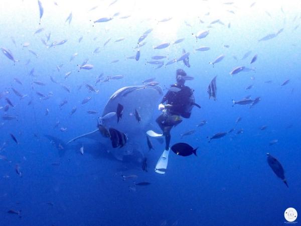 WhaleShark_6.jpg