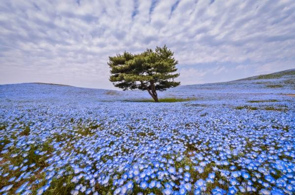 purpleflower_7.jpg
