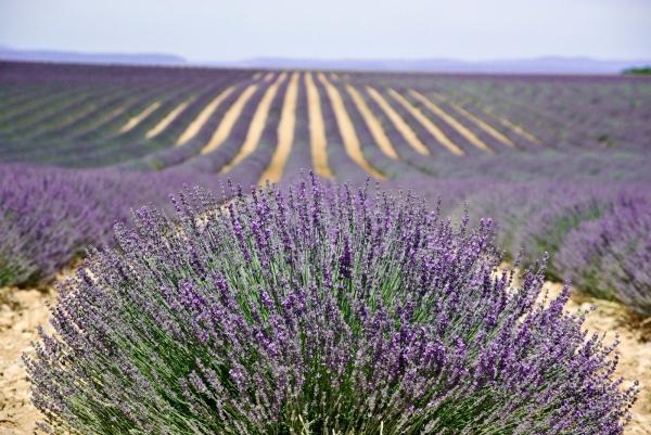 purpleflower_10.jpg