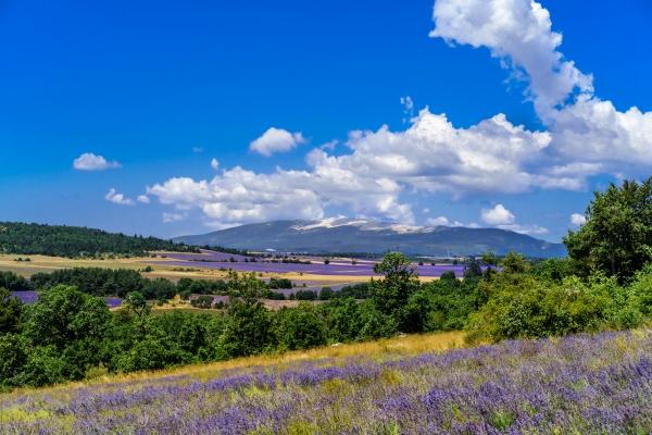 purpleflower_11.jpg