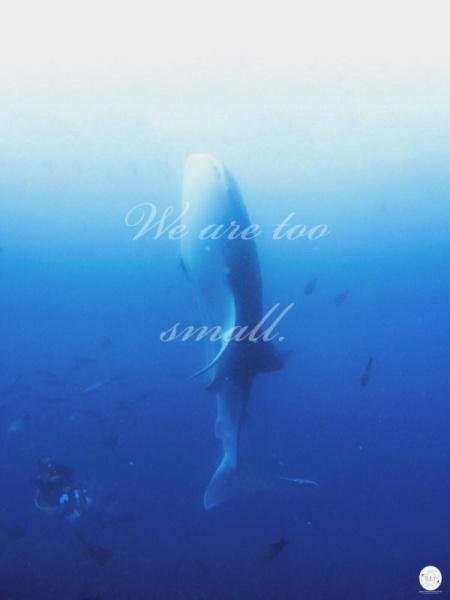 WhaleShark_22.jpg