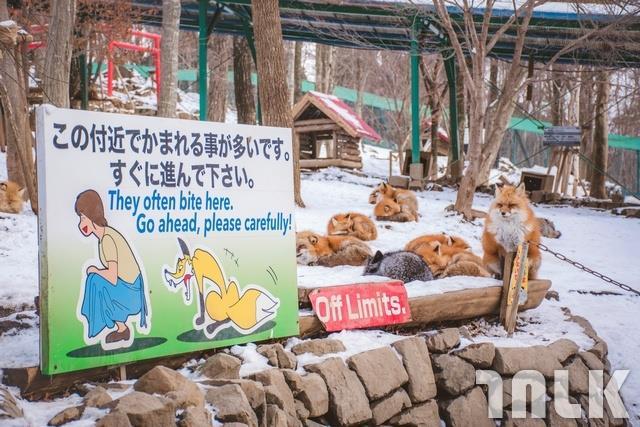 仙台狐狸村_190323_0004.jpg