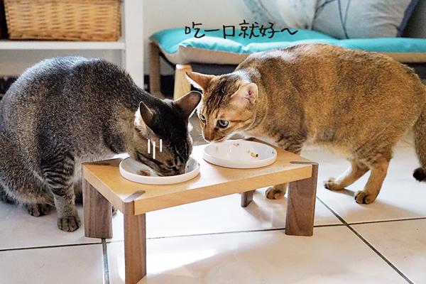 初木-貓碗10.jpg