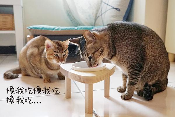 初木-貓碗01