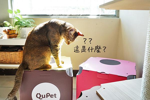 QuPet-05.jpg