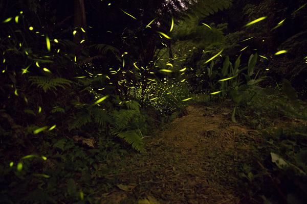 FireflyIMG_0278
