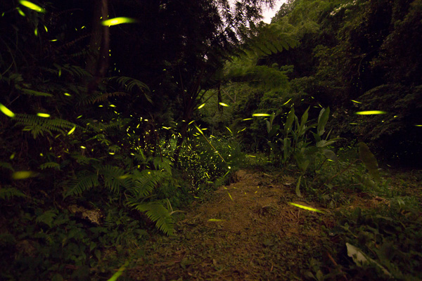 FireflyIMG_0279