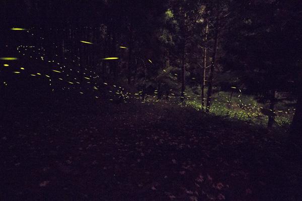 FireflyIMG_0264