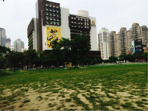grass02