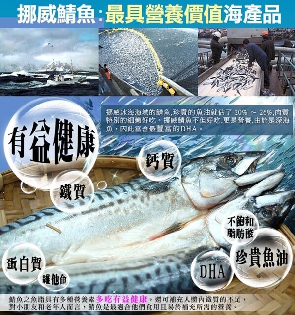 05鯖魚b.jpg