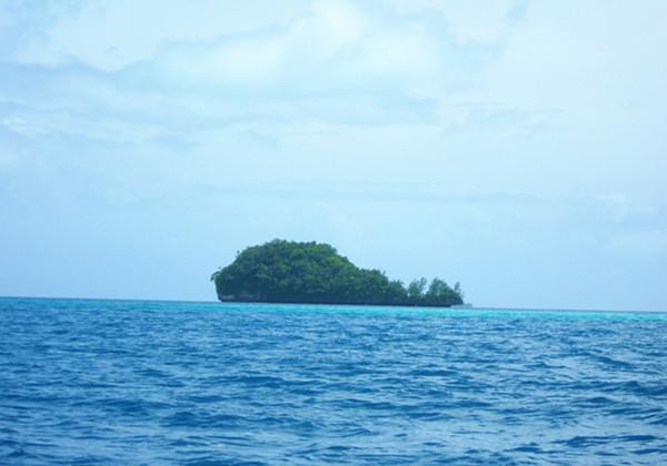 帛琉鯨魚島
