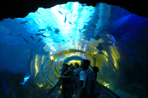 屏東海洋博物館-wikipedia.jpg