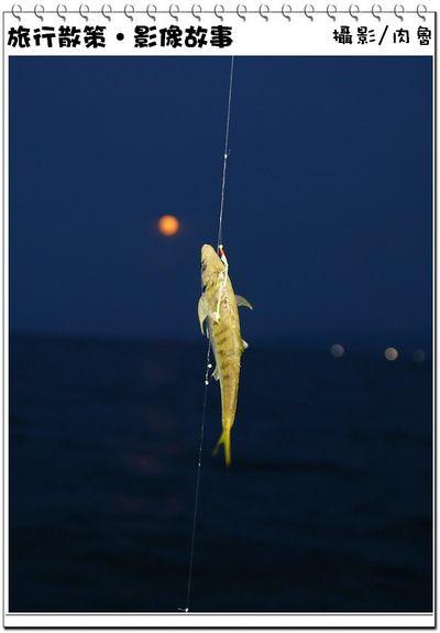夜釣28.jpg