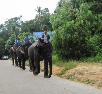環島-大象下班