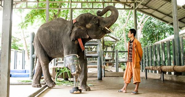小象.png