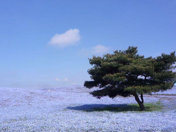 日本必去茨城1茨城觀光fb2.jpg