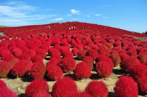 日本必去茨城1茨城觀光fb1.jpg