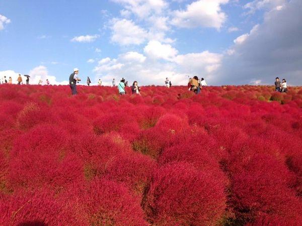 日本必去茨城1茨城觀光fb.jpg