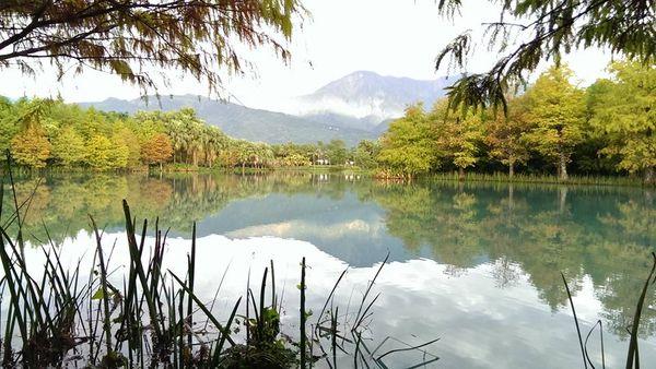 雲山水落羽松4.jpg