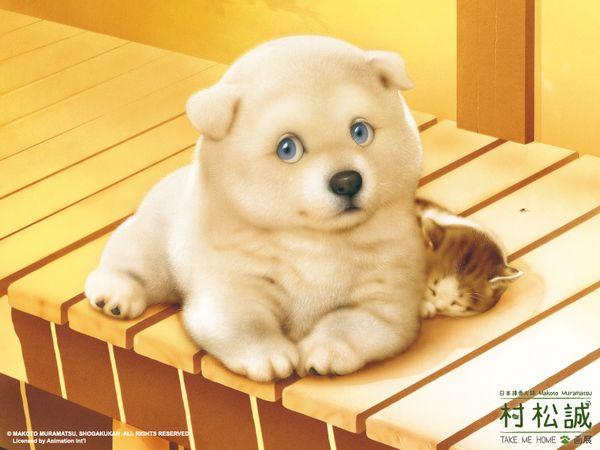 寵物3.jpg