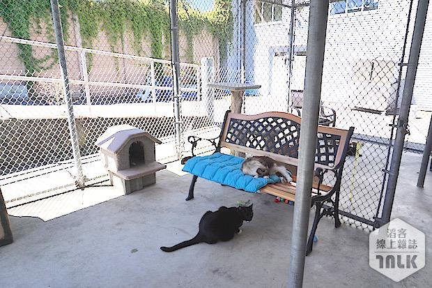SPCA 075.jpg