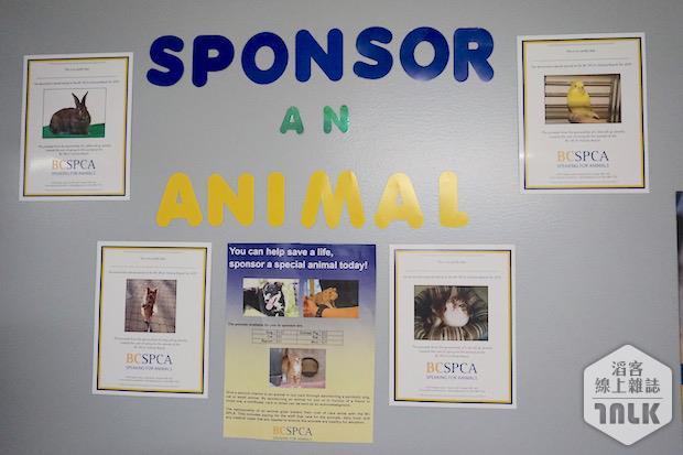 SPCA 126.jpg