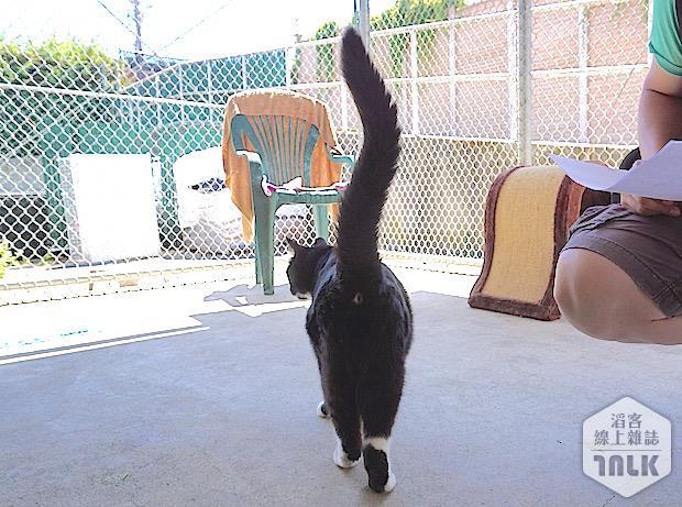 SPCA 076.jpg