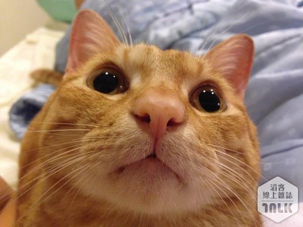 貓咪鼻子.JPG