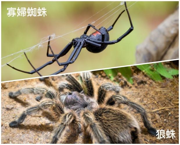 夏季蟲咬 spider.jpg