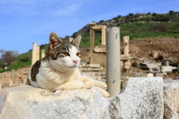貓咪知識 貓咪磁鐵.jpg
