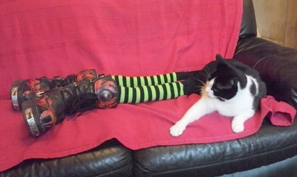 cats-in-tights-7.jpg