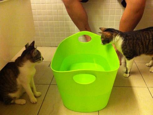 墨汁墨條洗澡