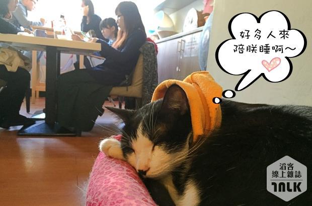 讀貓園032.jpg