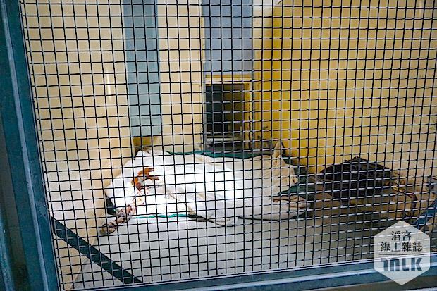 SPCA 099.jpg