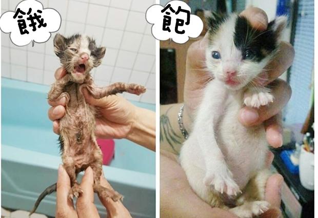 奶貓3.jpg