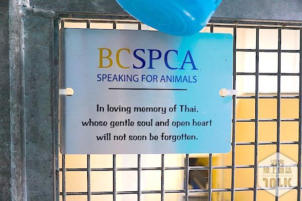 SPCA 100.jpg